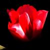 afbeelding van fleur001