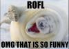 afbeelding van ROFL