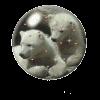 afbeelding van ijsbeertje